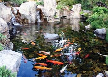 fish pond malaysia small artificial lake in selangor and kl