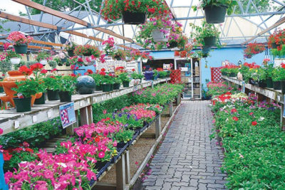 A Nursery Is Special Place Where Plants Are Propagated And Grown To Size They Usable There Retail Whole Nurseries Which The